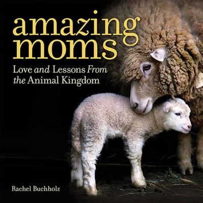 Amazing Moms: Love and Lessons from the Animal Kingdom - Buchholz, Rachel