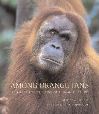 Among Orangutans: Red Apes and the Rise of Human Culture - Van Schaik, Carel, Ph.D., and Schaik, Carel Van, and Van Duijnhoven, Perry (Photographer)