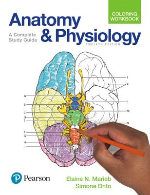 advanced anatomy study guide Anatomy exam 3 study guide - head & neck cranial nerves cn name origin foramen fibers branches functions i olfactory cns ectoderm cribiform plate (ethmoid bone) sensory.