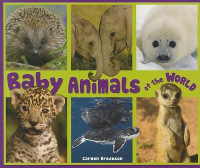 Baby Animals of the World - Bredeson, Carmen