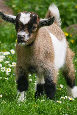 Baby Goats Notebook - Wild Pages Press