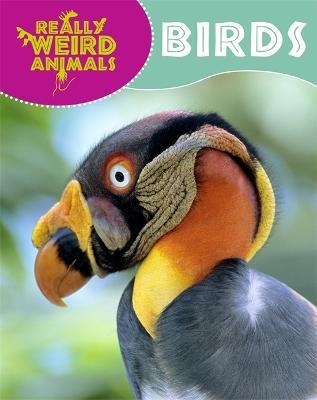 Birds - Hibbert, Clare