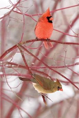 Cardinal Blank Journal - Nodin Press (Creator)