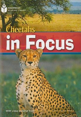 Cheetahs in Focus - Waring, Rob