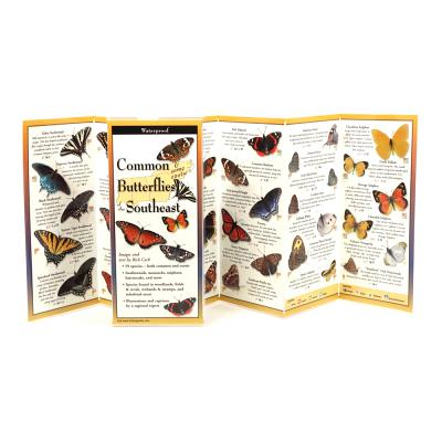 Common Butterflies of the Southeast -