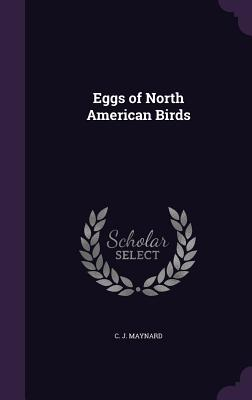 Eggs of North American Birds - Maynard, C J