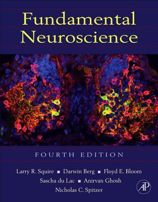 Fundamental Neuroscience - Squire, Larry (Editor), and Berg, Darwin (Editor), and Bloom, Floyd E, MD (Editor)