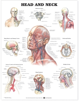 Head and Neck Anatomical Chart - Anatomical Chart Company (Editor)