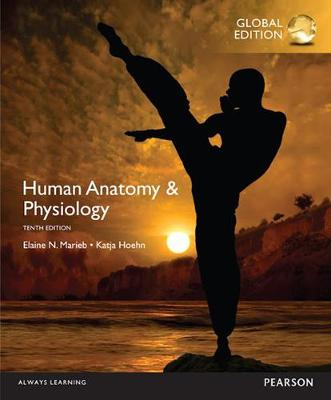 Human Anatomy & Physiology - Marieb, Elaine N., and Hoehn, Katja N.