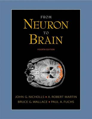 From Neuron to Brain - Nicholls, John G, and Martin, A Robert, and Wallace, Bruce G