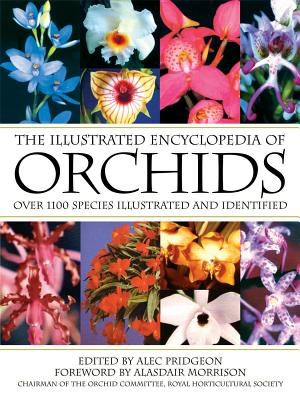 The Illustrated Encyclopedia of Orchids - Pridgeon, Alec (Editor), and Morrison, Alasdair (Foreword by)
