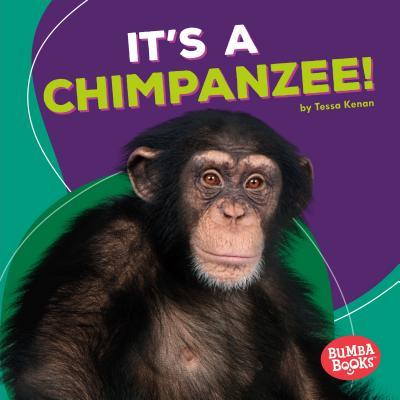 It's a Chimpanzee! - Kenan, Tessa