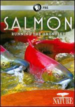 Nature: Salmon - Running the Gauntlet