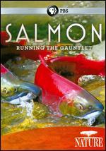 Nature: Salmon - Running the Gauntlet -