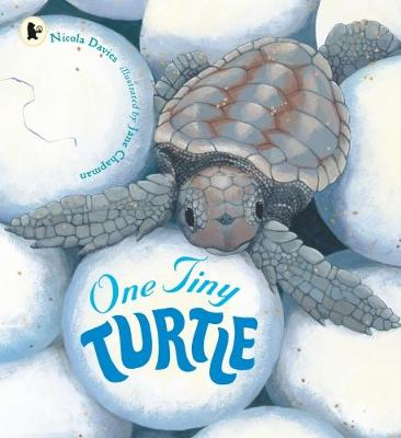 One Tiny Turtle - Davies, Nicola