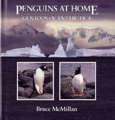 Penguins at Home: Gentoos of Antarctica - McMillan, Bruce