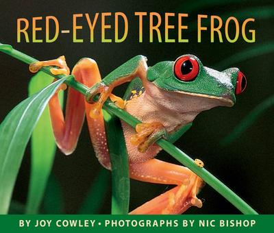 Red-Eyed Tree Frog - Cowley, Joy, and Bishop, Nic (Photographer)