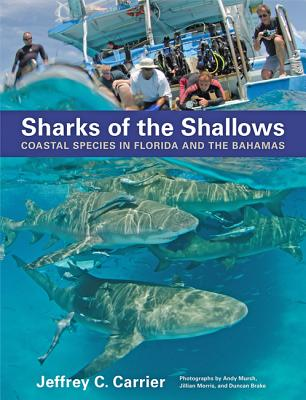 Sharks of the Shallows: Coastal Species in Florida and the Bahamas - Carrier, Jeffrey C