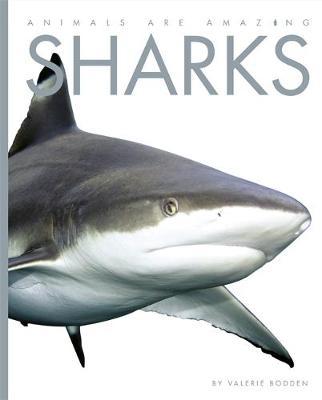 Sharks - Bodden, Valerie