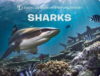 Sharks - American Museum of Natural History