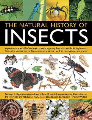 The Natural History of Insects: A Guide to the World of Arthropods, Covering Many Insects Orders, Including Beetles, Flies, Stick Insects, Dragonflies, Ants and Wasps, as Well as Microscopic Creatures - Walters, Martin