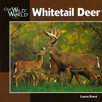 Whitetail Deer - Evert, Laura